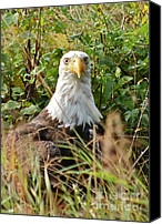 Bald Eagle Canvas Prints - Who  ME Canvas Print by Rick  Monyahan