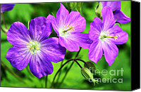 Wild Geranium Canvas Prints - Wild Geranium Canvas Print by Thomas R Fletcher