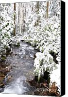 Williams Canvas Prints - Winter Monongahela National Forest Canvas Print by Thomas R Fletcher