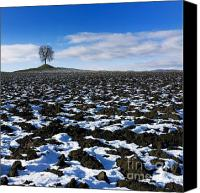 Ploughed Canvas Prints - Winter tree. Canvas Print by Bernard Jaubert