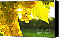 Horticultural Canvas Prints - Yellow grapes Canvas Print by Elena Elisseeva