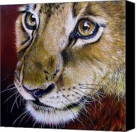 Jurek Zamoyski Canvas Prints - Young Lion Canvas Print by Jurek Zamoyski