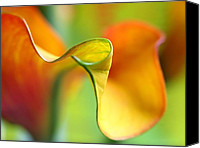 Calla Lily Canvas Prints - Zantedeschia Canvas Print by Juergen Roth