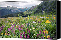 Wild-flower Canvas Prints - Wildflower Meadow Canvas Print by Bob Gibbons