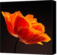 Nature Flowers Canvas Prints - Poppie Canvas Print by Bob Nardi