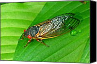 Cicada Canvas Prints - 17 Year Periodical Cicada Canvas Print by Douglas Barnett