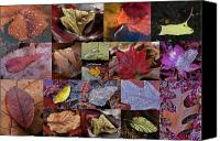 Autumn Canvas Prints - 18 Examples of Beautiful and Inspiring Tree Leaf Photography Canvas Print by Juergen Roth