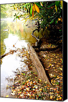 Williams Canvas Prints - Fall along Williams River Canvas Print by Thomas R Fletcher