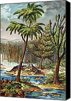 Schubert Canvas Prints - 1888 Colour Lithograph Of Permian Swamp Canvas Print by Paul D Stewart