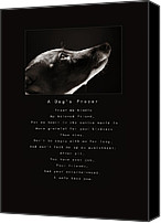 Whippet Canvas Prints - A Dogs Prayer Canvas Print by Angela Rath