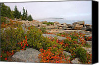 Acadia Canvas Prints - Acadia Coastline Canvas Print by Stephen  Vecchiotti
