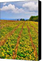 Country Scenes Photo Canvas Prints - All Lined Up Canvas Print by Emily Stauring