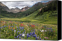 Wild-flower Canvas Prints - Alpine Flowers In Rustlers Gulch, Usa Canvas Print by Bob Gibbons