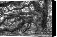 Island Photo Canvas Prints - Angel Oak Tree Charleston SC Canvas Print by Dustin K Ryan