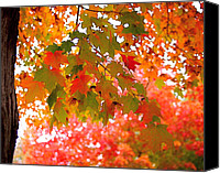 Photographic Art Print Canvas Prints - Autumn Leaves Canvas Print by Rona Black