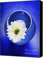 Decorative Floral Canvas Prints - Blue Canvas Print by Darren Fisher