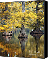 Lake Photo Special Promotions - Cypress Trees Canvas Print by Lynn Whitt