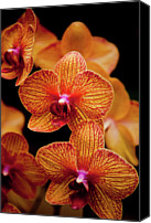 Orange Flower Photo Canvas Prints - Deep Cut Orchid Society 15th Annual Orchid Show Canvas Print by Dan Pfeffer