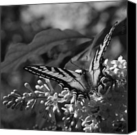 Monocromatico Canvas Prints - Expectation of the Dawn Canvas Print by Sharon Mau