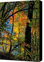 Fall Foliage Artwork Canvas Prints - Fall Fire Works Canvas Print by Robert Pearson