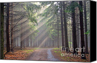Gleam Canvas Prints - God beams - coniferous forest in fog Canvas Print by Michal Boubin