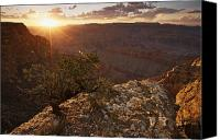 Land Feature Canvas Prints - Grand Canyon, West Of Lipan Point Canvas Print by Terry Moore