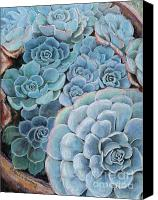 Clay Pastels Canvas Prints - Hens and Chicks Canvas Print by Debbie Harding