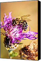 Harvesting Canvas Prints - Honey bee  Canvas Print by Elena Elisseeva