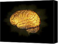 Background Gold Canvas Prints - Human Brain, Artwork Canvas Print by Claus Lunau