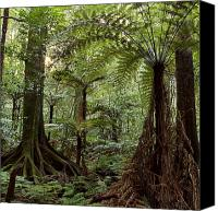 Rainforest Canvas Prints - Jungle Canvas Print by Les Cunliffe