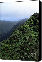 Oahu Digital Art Canvas Prints - Koolau Summit Trail Canvas Print by Thomas R Fletcher