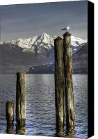 Seagull Photo Canvas Prints - Lake Maggiore Canvas Print by Joana Kruse