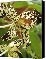 Blooms Painting Canvas Prints - Leopard Orchids Canvas Print by Ellen Henneke