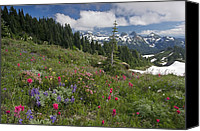 Wild-flower Canvas Prints - Mountain Meadow Canvas Print by Bob Gibbons