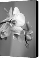 Amanda Barcon Canvas Prints - Orchid Canvas Print by Amanda Barcon