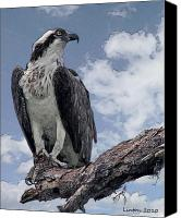 Osprey Canvas Prints - Osprey Canvas Print by Larry Linton