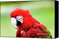 Vet Canvas Prints - Parrot Canvas Print by Sebastian Musial
