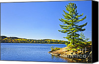 Vacation Canvas Prints - Pine tree at lake shore Canvas Print by Elena Elisseeva
