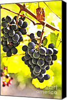 Sunny Vineyard Photo Canvas Prints - Red grapes Canvas Print by Elena Elisseeva