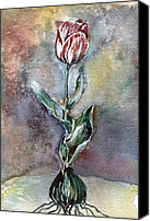 Floral Drawings Canvas Prints - Red Tulip Canvas Print by Mindy Newman