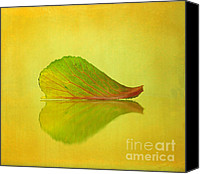 Macro Photography Canvas Prints - Reflection Canvas Print by Kristin Kreet
