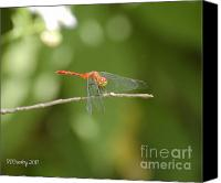 Meadowhawk Canvas Prints - Ruby Meadowhawk Dragonfly Canvas Print by Susan Stevens Crosby