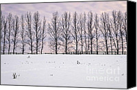 Tranquil Canvas Prints - Rural winter landscape Canvas Print by Elena Elisseeva