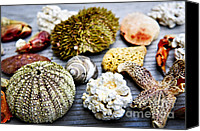 Crab Canvas Prints - Sea treasures Canvas Print by Elena Elisseeva
