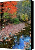 Mountain Stream Canvas Prints - Sugar Maple Birch River Canvas Print by Thomas R Fletcher