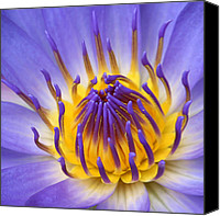 Lotus Art Canvas Prints - The Lotus Flower Canvas Print by Sharon Mau