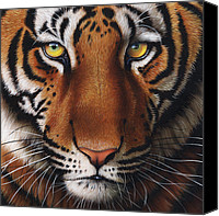 Jurek Zamoyski Canvas Prints - Tiger  Canvas Print by Jurek Zamoyski