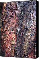 Tree Canvas Prints - Tree Bark Canvas Print by John Foxx