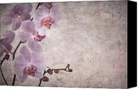 Peeling Canvas Prints - Vintage orchids Canvas Print by Jane Rix