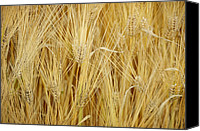 Buy Photos Online Canvas Prints - Wheat Field Canvas Print by Steven  Michael